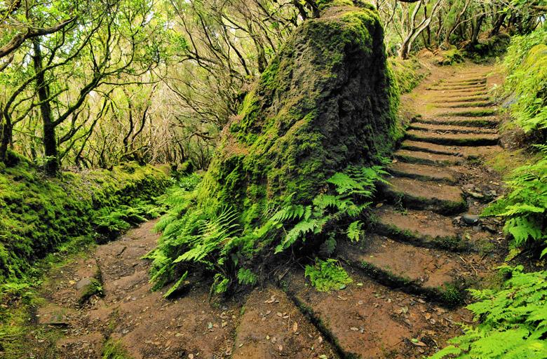 Pathway on Las Montanas de Anaga in Tenerife