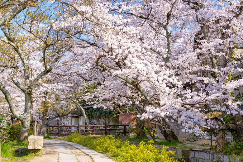 Philosophers Walk in Kyoto