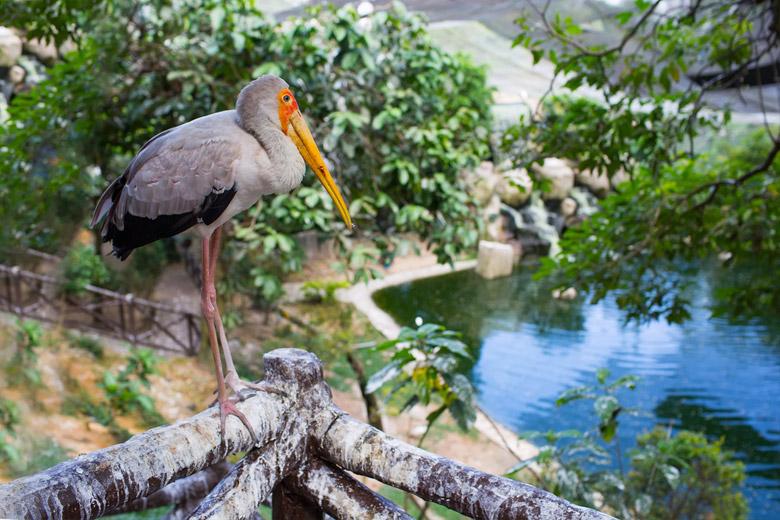 Marabou bird in Phoenicopterus in Kuala Lumpur Bird Park